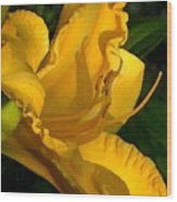 Golden Lily Watercolor Wood Print