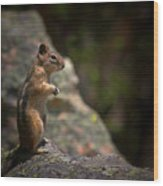 Golden Mantled Ground Squirrel Rocky Mountains Colorado Wood Print