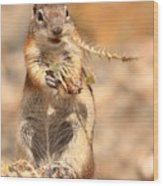 Golden-mantled Ground Squirrel With A Prickly Bite Wood Print