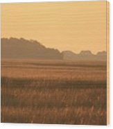 Golden Marshes Wood Print