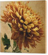 Golden Mum Wood Print
