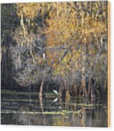 Golden On The River Wood Print