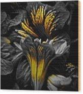 Golden Paintbrush  Wood Print