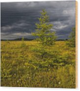 Golden Plains Wood Print
