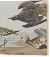 Golden Plover Wood Print