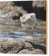 Golden Plover Wood Print