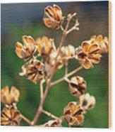 Golden Pods Wood Print