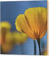 Golden Poppy Reaching For The Skies  Wood Print