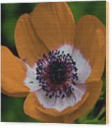 Golden Poppy Wood Print