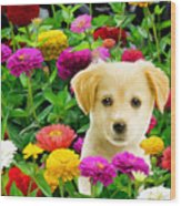 Golden Puppy In The Zinnias Wood Print