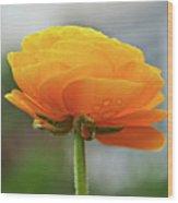 Golden Ranunculus Wood Print