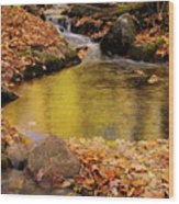 Golden Reflections In A Stream On The Blanchet Trail Gatineau Pa Wood Print