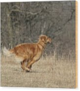 Golden Retriever 2 Wood Print
