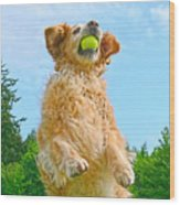 Golden Retriever Catch The Ball  Wood Print