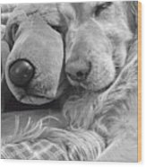 Golden Retriever Dog And Friend Wood Print
