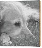 Golden Retriever Dog In The Cool Grass Monochrome Wood Print