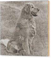 Golden Retriever Dog Sepia Wood Print by Jennie Marie Schell