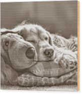 Golden Retriever Dog Sleeping With My Friend Sepia Wood Print