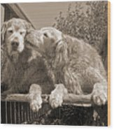 Golden Retriever Dogs The Kiss Sepia Wood Print