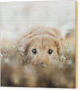 Golden Retriever Wood Print