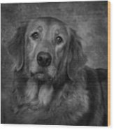 Golden Retriever In Black And White Wood Print