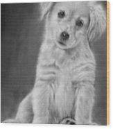 Golden Retriever Puppy Drawing Wood Print