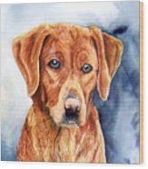 Golden Retriever Sara Wood Print