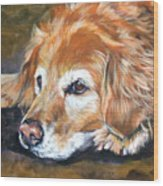 Golden Retriever Senior Wood Print