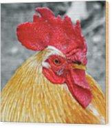 Golden Rooster Portrait Wood Print