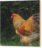 Golden Rooster Wood Print