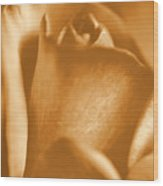 Golden Rose Bud Wood Print