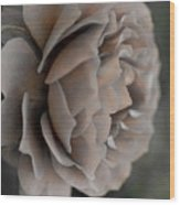 Golden Shade Rose Wood Print