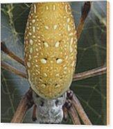 Golden Silk Spider 1 Wood Print