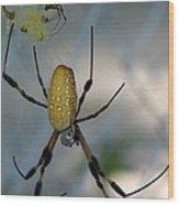 Golden Silk Spider 2 Wood Print
