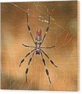 Golden Silk Spider 3 Wood Print