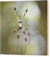 Golden Silk Spider Wood Print