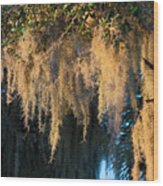 Golden Spanish Moss Wood Print