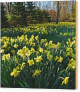 Golden Spring Carpet Wood Print