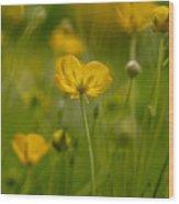 Golden Summer Buttercup 3 Wood Print
