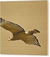 Golden Sunlight On Hawk Wood Print