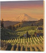 Golden Sunset Over Hood River Pear Orchard Wood Print