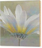 Golden Sunshine On A Most Splendid Daisy Wood Print
