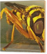 Golden Syrphid Wood Print