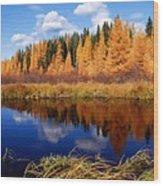 Golden Tamaracks Along The Spruce River Wood Print
