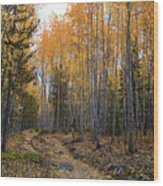 Golden Trail Wood Print by Barbara Schultheis