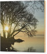 Golden Tranquility - Lacy Tree Silhouettes On The Lake Shore Wood Print