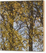 Golden Tree 2 Wood Print