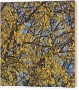 Golden Tree 3 Wood Print