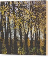 Golden Trees 1 Wood Print
