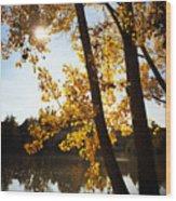 Golden trees in autumn Sindelfingen Germany Wood Print